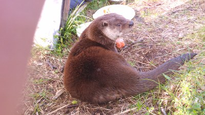 Otto the otter.