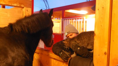 The cat came to inspect the saddling of the horse.